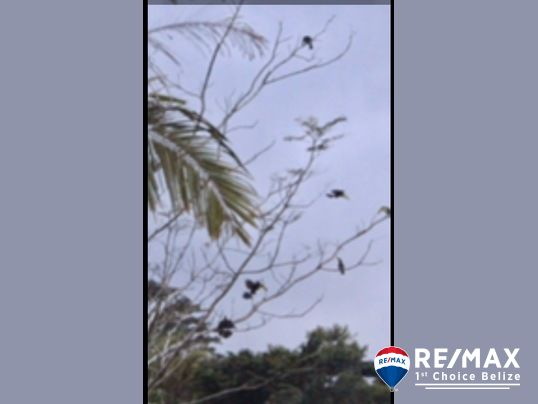 These Scarlet Macaws were seen on a tree inside the property.