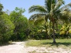 Liana Glade Homsite Lots in Corozal with access to Sea Front Parks