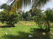 One Acre Lot in Riversdale