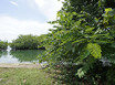 1.4 Acres Sea to Lagoon in the Village
