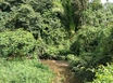 9 Acres of Jungle on Stream between Georgetown and Maya Mopan