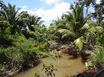 35 Acre Coconut Farm with Creek by Redbank